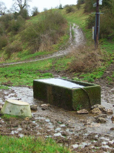 Cattle trough and track