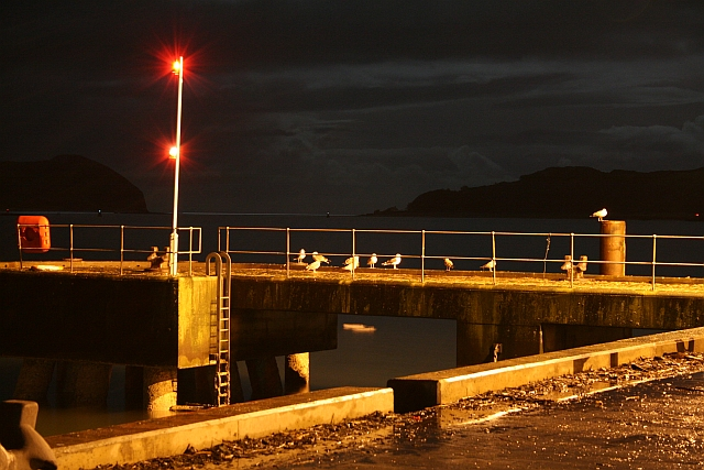 Seagulls at Night