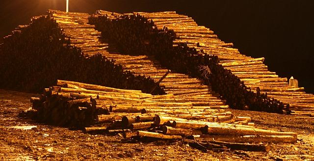 Timber Awaiting Embarkation