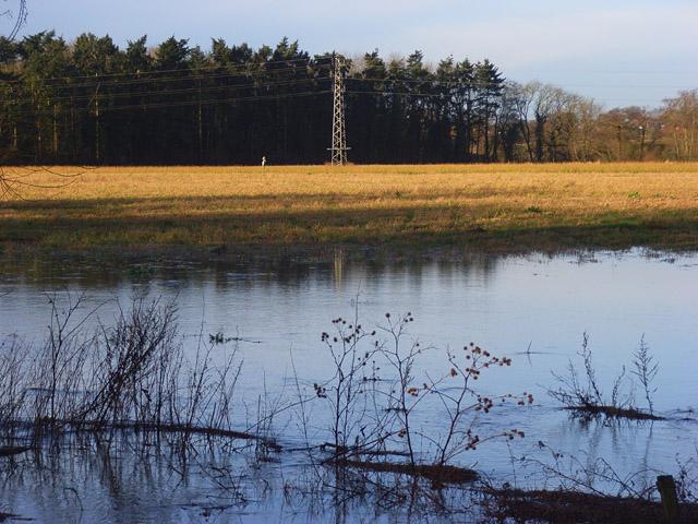 Farmland and plantation, Shinfield