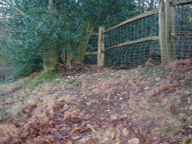 Farnham Old Park boundary bank