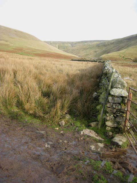 Wall in Kirkdale