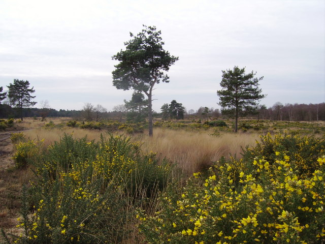 Yateley Common