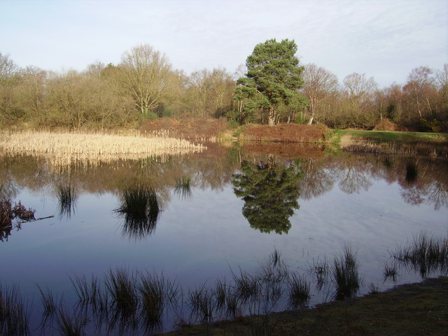 Lower Pond in Yateley Country Park