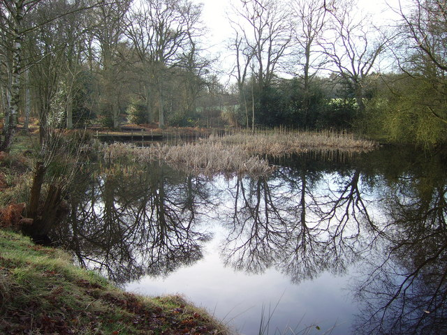 Stroud Pond in Yateley Common Country Park