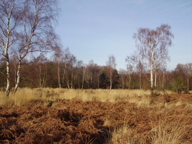 Grasslands in Yateley Common Country Park