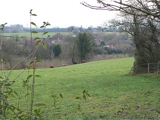 Hillside grazing at Little Birch