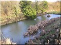 ST6867 : Medieval Pond in Saltford by Rick Crowley