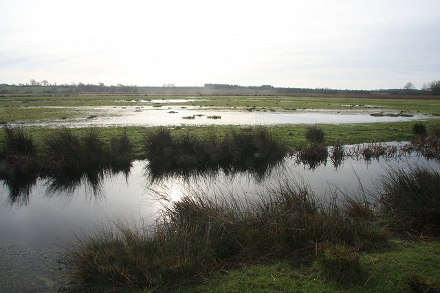 Flooded marshland