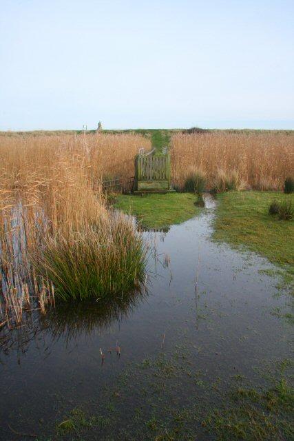 Footbridge to River Alde