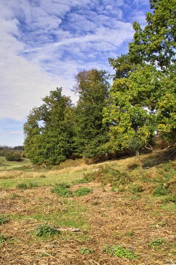 Knole Park near Sevenoaks