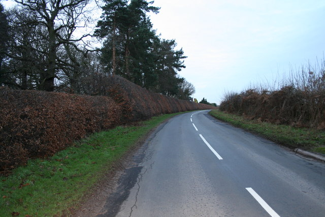 Beech hedge 3/4 mile long