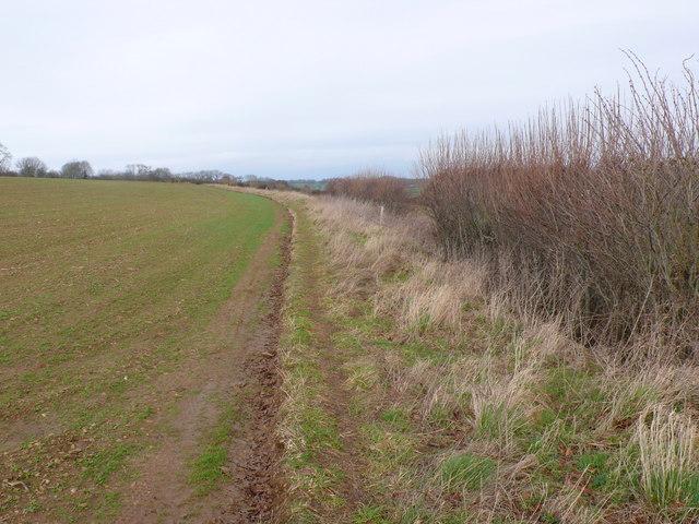 Hedge row and field near Purse Caundle