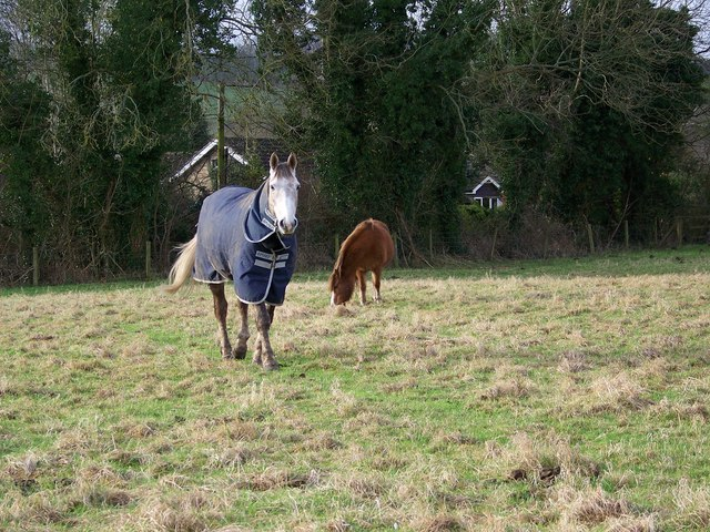 Horses and ponies in Revels Field