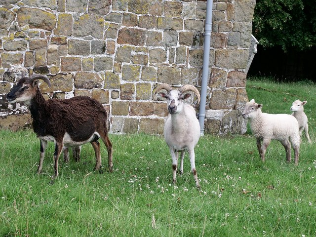 Churchyard goats, Lusby