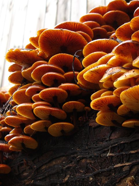 Fungi fruiting