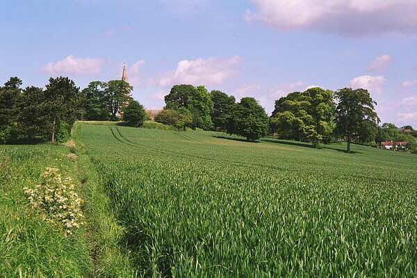 Kirkby-in-Ashfield - cornfield and church