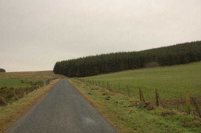 Forest by Hill of Shenwall