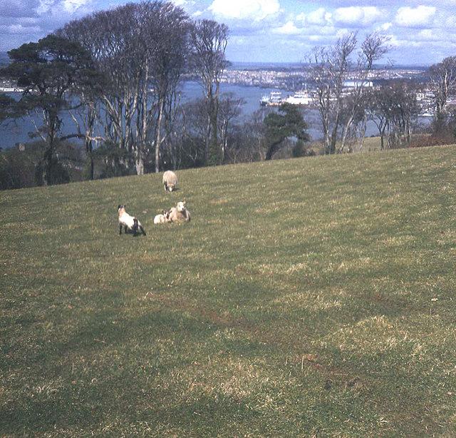 Mount Edgcumbe Country Park