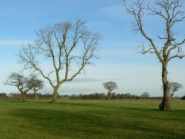 Trees in winter, Whetstone Farm, Horsforth