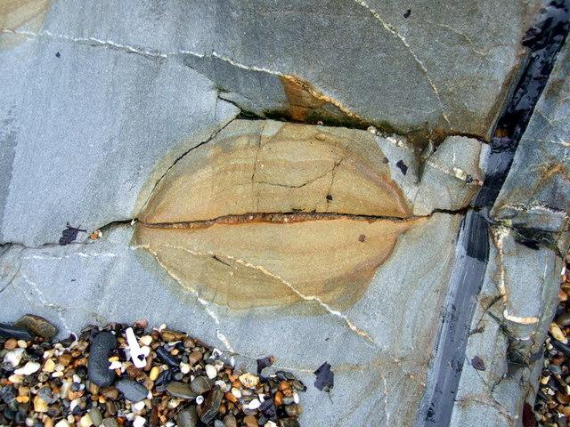 Flat fish on stone