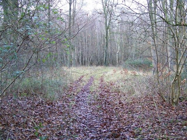 Woodland ride, Vernditch Chase
