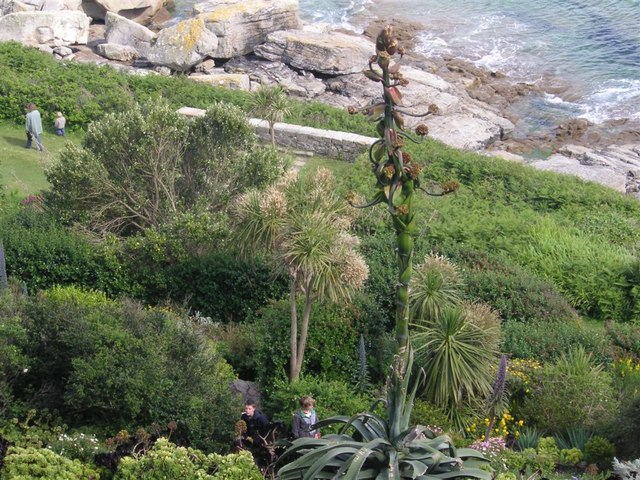 Gardens on St Michael's Mount