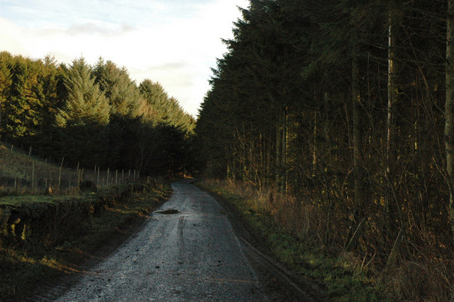 Unclassified road through small area of forest near Meadowhead