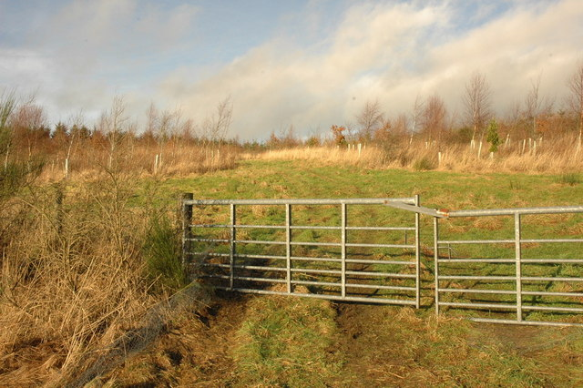 Gate and young trees planted in a field