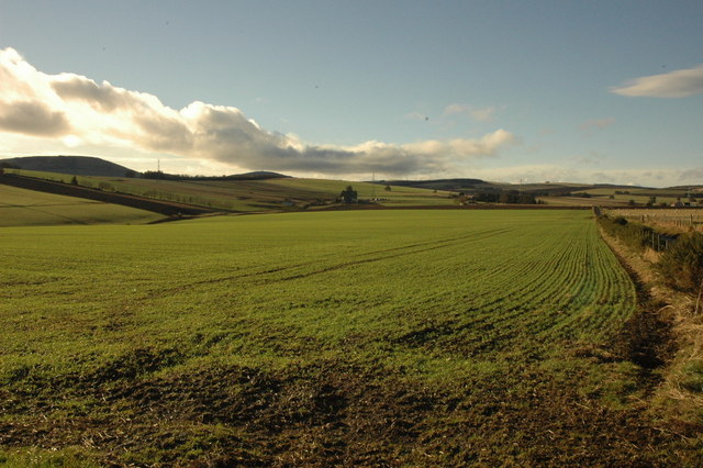 Farmland in the afternoon sunshine