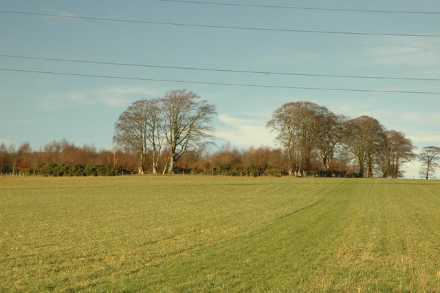 Field and Wood of Middleton
