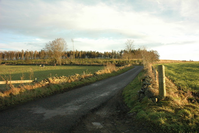 Road past Wood of Ardmiddle