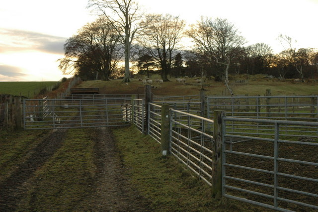 Sheep pens near Auchininna