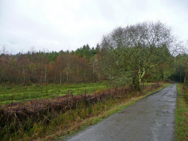 Woodland at Buckland