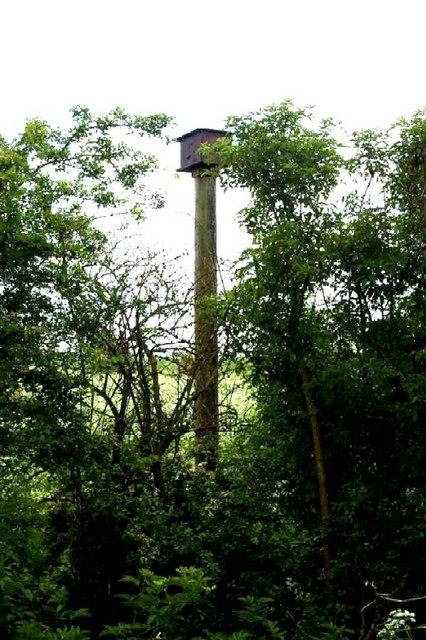 Owl roosting box