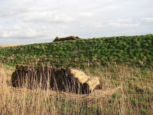 Stacks of reeds