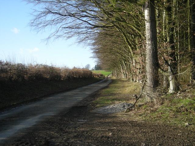 Lane to Pinstones