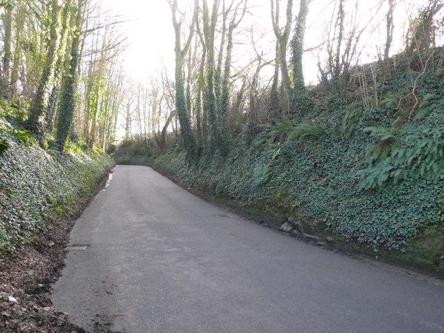 Vagg Hollow near Yeovil