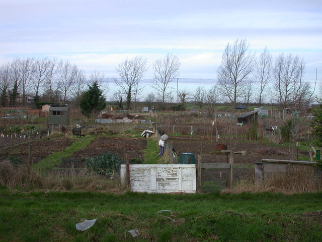 Ely Road allotments