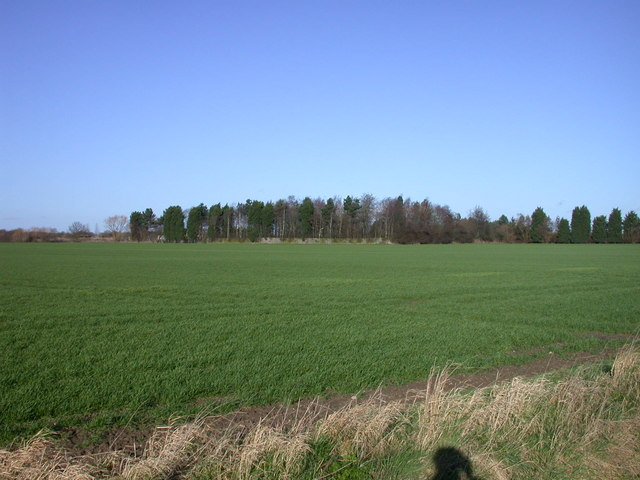 Fields and woods viewed from Long Drove