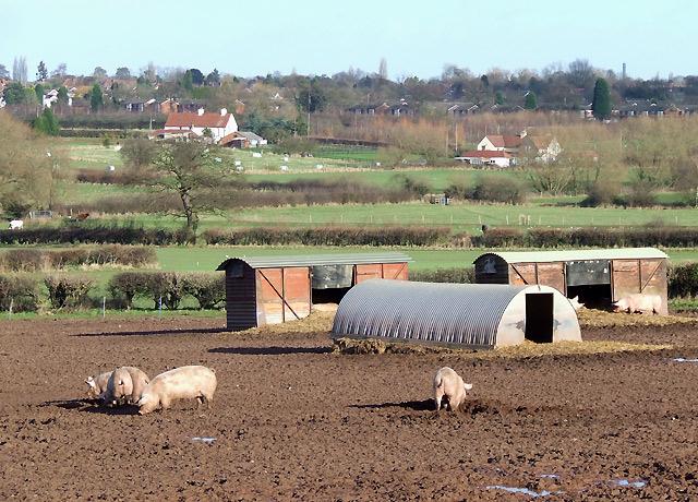 Pig Field, Lower Penn, Staffordshire