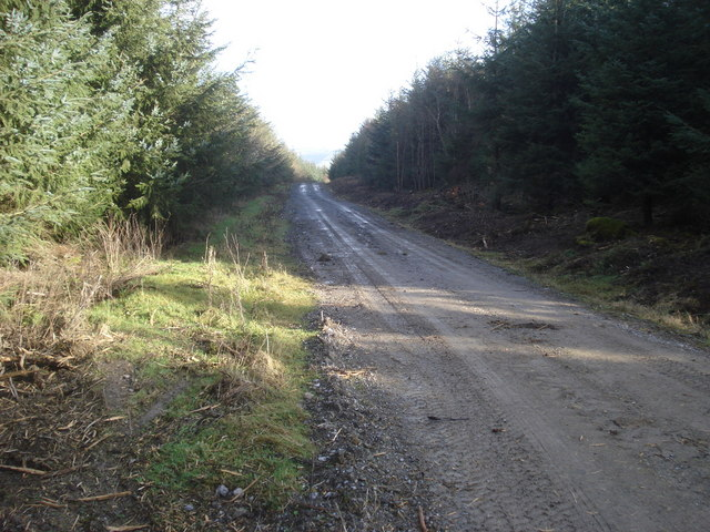 Forestry track on Ednol Hill