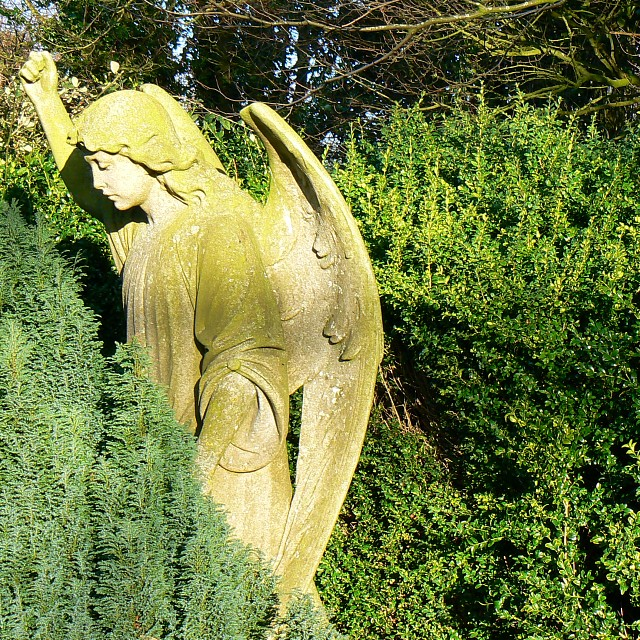 An angel in the cemetery, Kingston Lisle
