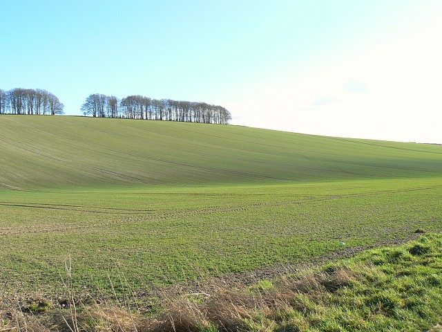 Nascent cereal crop, south of Kingston Lisle