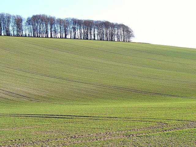 Sparsholt Down, south of Kingston Lisle