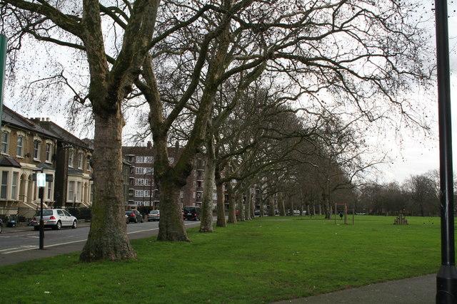 Plane trees along Gascoyne Road, Well Street Common, South Hackney