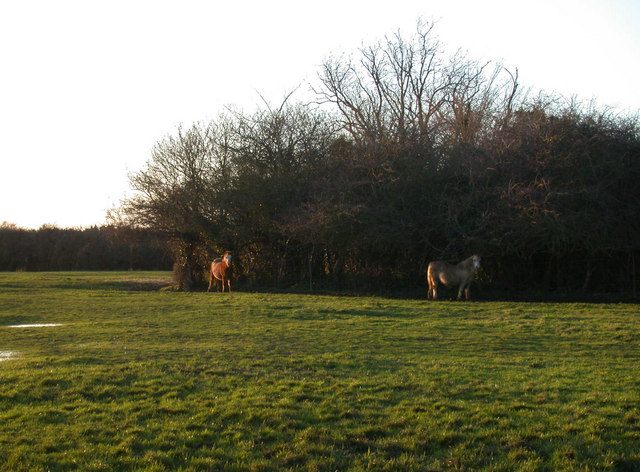 Horses by Duck End