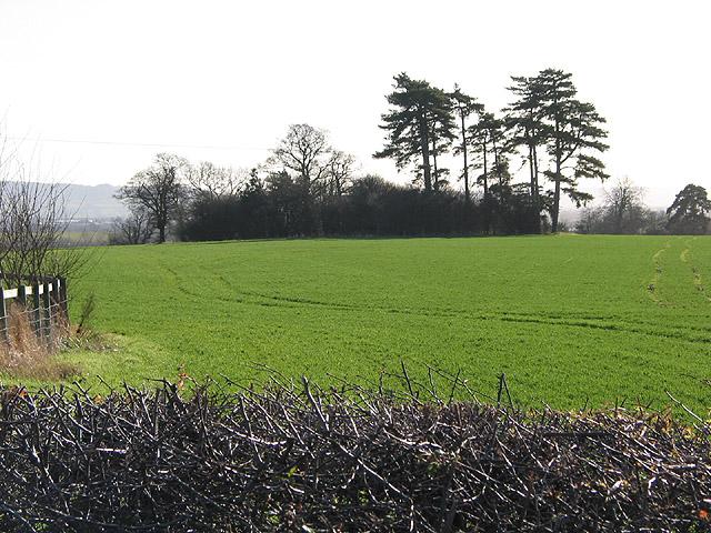 Small copse across farmland