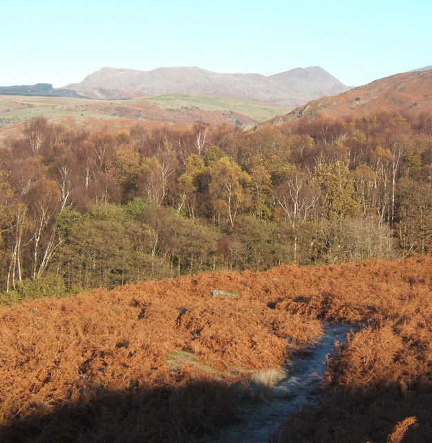 View north over bracken and woodland near Green Moor