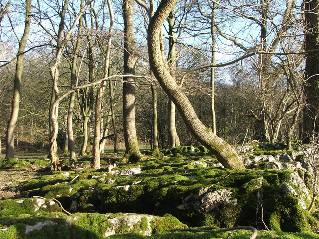 Trees growing on limestone pavement